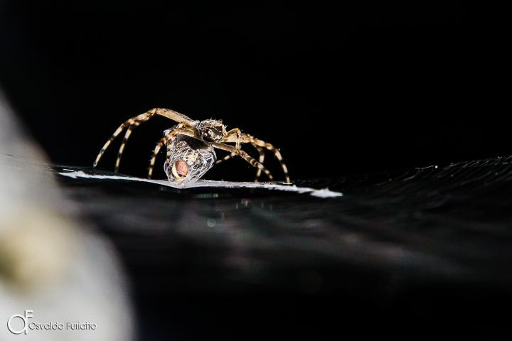 A imagem mostra uma aranha